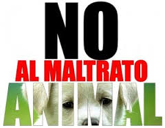 El hombre que ha maltratado a más de 55 perros, declara ante un juez.